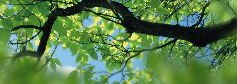 Tree-banner-1170x419-1170x419-min