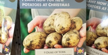 Potatoes for Christmas