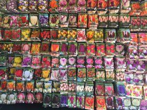 Spring flowering bulbs now on sale